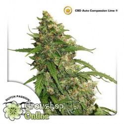 Auto CBD Compassion Lime