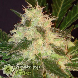 Widow de CBD Seeds