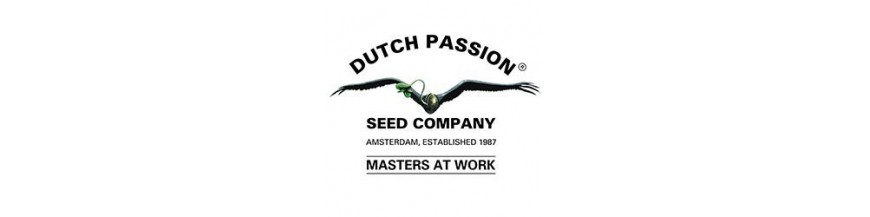 Dutch Passion regular
