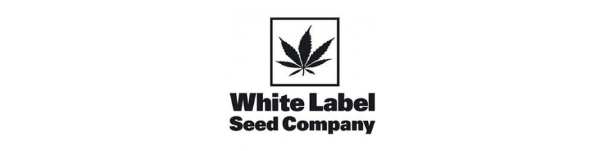 White Label regular