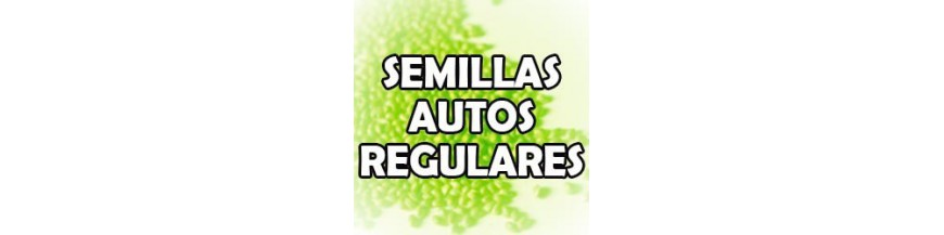 Semillas regulares autoflorecientes