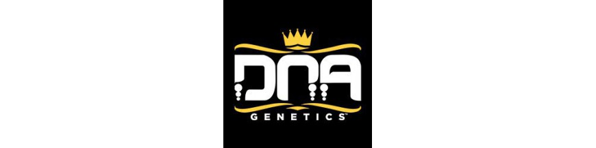 DNA Genetics regular